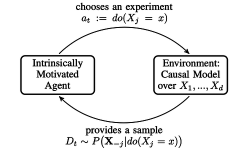 Optimal experimental design via Bayesian optimization: active causal structure learning for Gaussian process networks